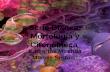 Serie Blanca: Morfología y Citoquímica Kevin Goad Katherine Miranda Moisés Serrano.