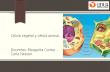 Célula vegetal y célula animal ppt