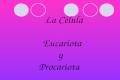 La Célula Eucariota y Procariota. ¿Qué es una célula eucariota? Se denomina eucariotas a todas las células que tienen su material hereditario fundamental.
