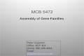 MCB 5472 Assembly of Gene Families Peter Gogarten Office: BSP 404 phone: 860 486-4061, Email: gogarten@uconn.edu gogarten@uconn.edu.