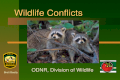 Wildlife Conflicts