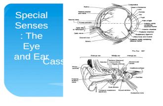 Module 13: Eye and Ear