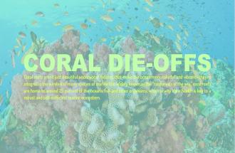 CORAL DIE OFFS INFOGRAPHIC